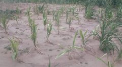 https://zodiakmalawi.com/nw/national-news/66-news-in-southern-region/3273-blaad-sounds-sos-over-maize-seeds-for-winter-cropping