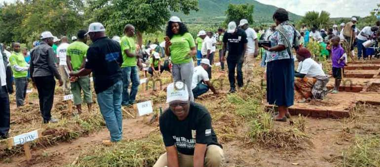 Tree planting: Survival rate low