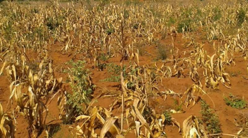 Malawi has in recent years been hit by dry spells owing to effects of climate change