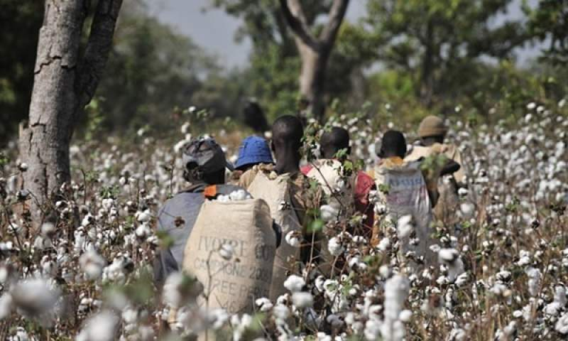 Cotton - Farmers
