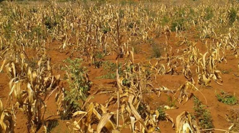Most parts of the country are facing food shortage due to, among other factors, dry spell