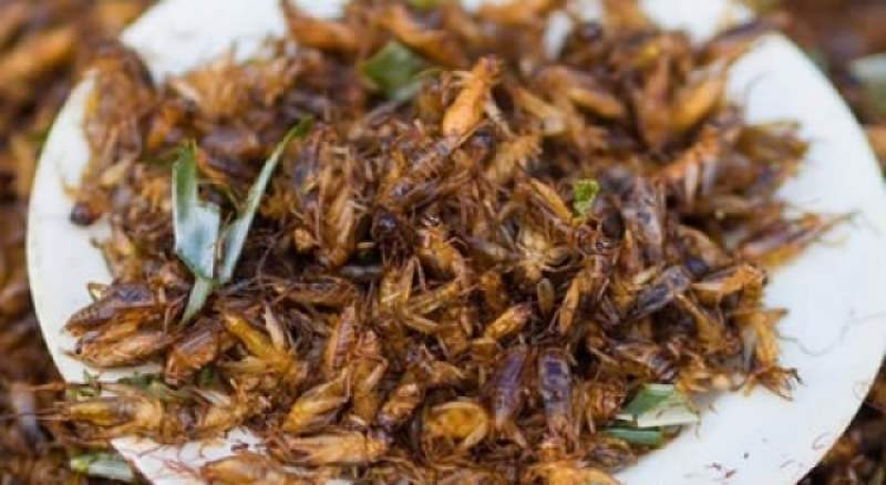 Historically, crickets have been part of Malawians' diet.