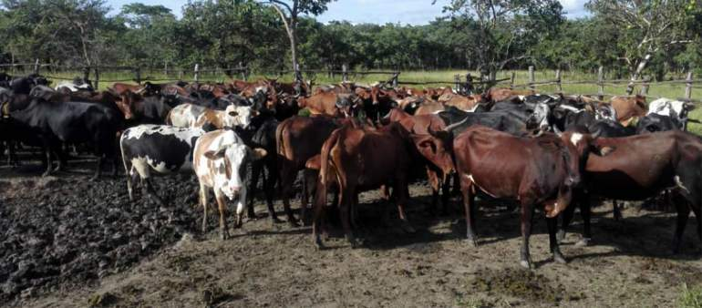 Livestock farming like other sectors has the potential of saving the country's economy