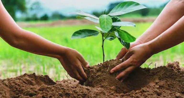 ESCOM targets 90 percent survival rate of the 7,000 tree seedlings that have been distributed