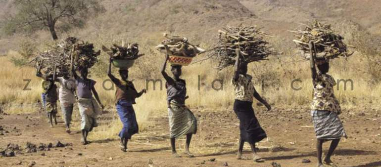 Firewood Picking: Gets Kasungu women abused