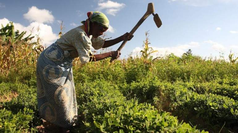 Women contribute about 70 percent of food production for local consumption